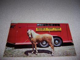1970s BEEBE'S PONY FARM, SWANTON VERMONT VTG POSTCARD - HORSE TRAILER - Altri
