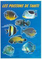 Polynésie Française LES POISSONS DE TAHITI Du Lagon (poisson) @ (photo TEVA SYLVAIN 927 Tahiti )*PRIX FIXE - Polynésie Française