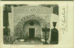 MONTECATINI ( PISTOIA ) SORGENTE DELL'ACQUA OLIVO - EDIZIONE ALTEROCCA - SPEDITA 1903 (BG5555) - Pistoia