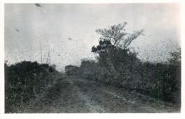 Publ. ZAGOURSKI - L'Afrique Qui Disparait - A.E.F. - Passage De Sauterelles- N° 204 - Congo Francese - Altri