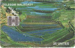 MDG-42 - Rice Terraces - Madagascar