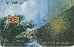 MDG-45 - Coconut Palm - Madagascar