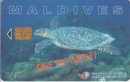 MAL-C-01d - Turtle - 227MLDGIA - Maldives