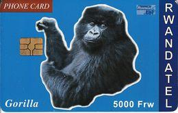 RWA-C-03 - Gorilla - Rwanda