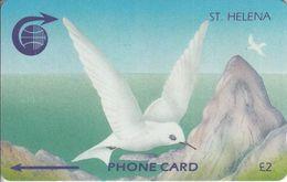 STH-06 - White Tern - 3CSHA - St. Helena Island