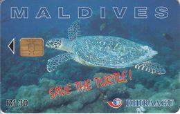 MAL-C-01f - Turtle - 291MLDGIA - Maldives