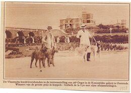 Orig. Knipsel Coupure Tijdschrift Magazine - Oostende - Wedstrijd Vlaamse Koedrijvershonden - 1928 - Unclassified