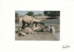 TCHAD DOUGUIA VOYAGE EN MEHAREE/PHOTO ALAIN DENIS (dil463) - Ciad