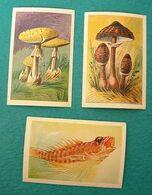 Lot De 3 Vignettes Images ROZAN Et Chien Qui Saute - Champignons - Poissons - Other