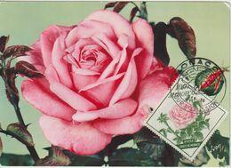 Monaco Carte Maximum Fleurs 1959 Rose 522 - Cartoline Maximum