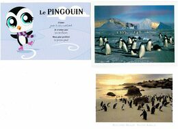 Lot 2 Cpm - Pingouin - BOULDERS BEACH SOUTH AFRICA - SURVIVAL ANGLIA LAST WILDERNESS + Image - Animali