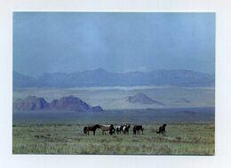 CP Photo Mongole Neuve. Automne Autumn. Zavkhan, Golyn Ulaan. Chevaux Dans La Steppe De Mongolie. Mongolia Mongolei - Mongolia