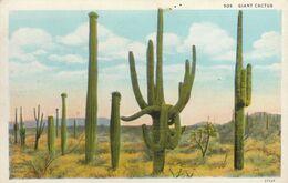 Cactus Géants En Californie     ///   REF . Sept.  20   ///  N° 12.665 - Sukkulenten