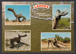 74712/ LANDES, *Visages Des Landes*, Gadgets Animaliers, Bois Sculptés Par Les Vents Marins - Non Classificati