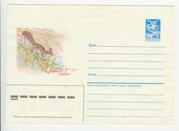 URSS , 1985 , Squirrel , Pre-paid Envelope - Storia Postale