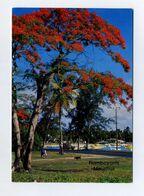 CP Neuve. Mauritius, Ile Maurice. Arbres : Flamboyants, Flametrees. Voir 2 Images - Mauritius