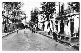 Cpsm: ALGERIE - PALESTRO - Rue Principale (animée) 1957   Ed. Photo Africaines   N° 23 - Autres Villes