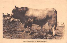 12-AUBRAC-N°T2568-E/0381 - France