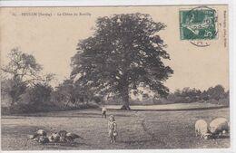 72 BRULON Le Chêne De Rouilly ,fillette Gardienne De Dindons Et De Moutons - France