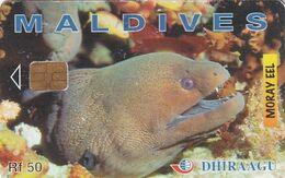 MALDIVES ISL. - Moray Eel, CN : 202MLDGIB, Used - Maldives