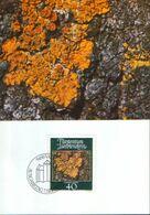 Liechtenstein - Maximum Postcard,maxicard 1981 - Mosses And Lichens - Yellow Lichen (Xanthoria Parietina) - Plantas Medicinales