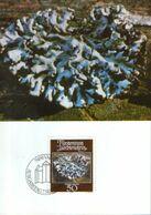 Liechtenstein - Maximum Postcard,maxicard 1981 - Mosses And Lichens - Parmelia Lichen (Parmelia Physodes) - Plantas Medicinales