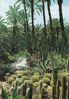 Spain - Elche - Huerto Del Cura - Echinocactus Grussonil - Mailed / Stamps - Sukkulenten