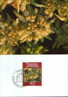 Liechtenstein - Maximum Postcard,maxicard 1981 - Mosses And Lichens -  Blunt-leaved Bogmoss (Sphagnum Palustre) - Plantas Medicinales