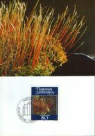 Liechtenstein - Maximum Postcard,maxicard 1981 - Mosses And Lichens -  Creeping Feathermoss ( Amblytegium Serpens) - Plantas Medicinales