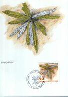 Liechtenstein - Maximum Postcard,maxicard 1992 - Chain Fern(Blechnum Spicant) - Woodwardia - Plantas Medicinales