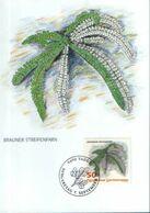 Liechtenstein - Maximum Postcard,maxicard 1992 - Finger Fern(Asplenium Trichomanes) - Plantas Medicinales