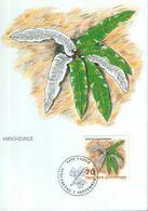 Liechtenstein - Maximum Postcard,maxicard 1992 - Hart's Tongue Fern (Phyllitis Scolopendrium) - Plantas Medicinales