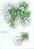 Liechtenstein - Maximum Postcard,maxicard 1992 - Wall Rue Fern (Ruta Muraria) - Plantas Medicinales