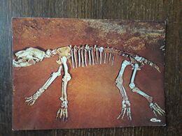 L30/66 AZE . Grottes D'AZE . Squelette D'un Ours De 300kg - France