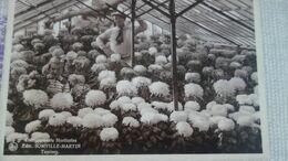 Tamines - Etablissements Horticoles Somville-martin - Sambreville