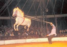 CIRQUE ARLETTE GRUSS 1987 / PHILIPPE GRUSS - DRESSAGE CHEVAL - Circus