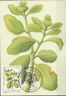 716 S. Tomé E Principe 1983 Medicinal Plants Maximum Card Bryophillum Pinatum Piante Medicinali Maxi - Plantas Medicinales