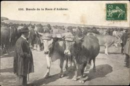 CPA Aubrac Aveyron, Boeufs De La Race - France