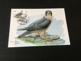 CM N °3751 ( Oiseau De Buzin) Sur Carte D'Andre Buzin + Signature - Cartoline Maximum