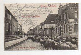 XX005408-171/ Gnoien I. Meckl. Hauptstr.  Schafe AK 1903 - Sin Clasificación