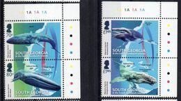 South Georgia 2018.  Marine Fauna.  Whales Marine Mammals Animals. Marine Migrating Animals. MNH - Géorgie Du Sud