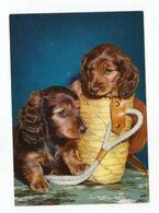 Postcard Teckel Dackel Dog Puppy Hund Welpe Petit Chien Perro Cachorro Cão Cao Germany Not Circulated - Hunde