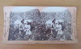 """KEYSTONE - Photo Stéréoscopique - A """"Corner In Cotton"""" / Un """"Coin Dans Le Coton"""" (esclaves) - 1898 - Stereoscopio"""