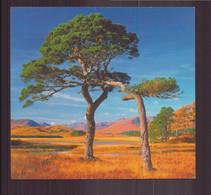 Pins D'Ecosse ( 14.5 X 13.5 Cm ) - Trees