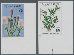 Thematik: Flora, Botanik / Flora, Botany, Bloom: 1980, MOROCCO: Flowers Set Of Two 0.50dh. 'Senecio - Other