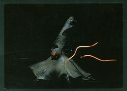 Vampire Squid Bioluminescence Living Light Deep Ocean Octopus Creature Postcard - Pesci E Crostacei