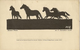 NATIONAL COUNCIL FOR ANIMAL WELFARE   EXMOOR PONIES HORSE HORSES  ANIMALS - Other