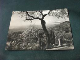 ALBERO IN FIORE VEDUTA ANNULLO MULAZZO MASSA CARRARA 1959 PIEGA - Trees