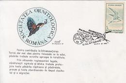 ANIMALS, BIRDS, COMMON TERN, KINGFISHER, SPECIAL COVER, 1993,ROMANIA - Albatrosse & Sturmvögel