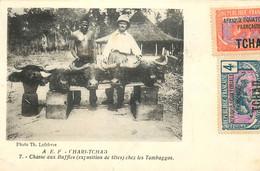 A.E.F. - Chari-Tchad - Chasse Aux Buffles ( Exposition De Têtes ) Chez Les Tambaggos - Tsjaad